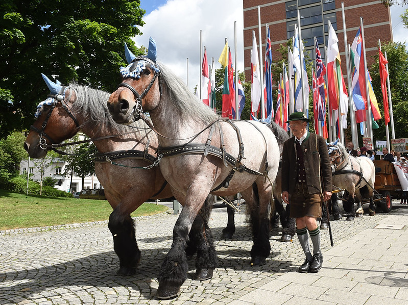 Six horses pull cart, led by man in traditional german dress, European flags behind them