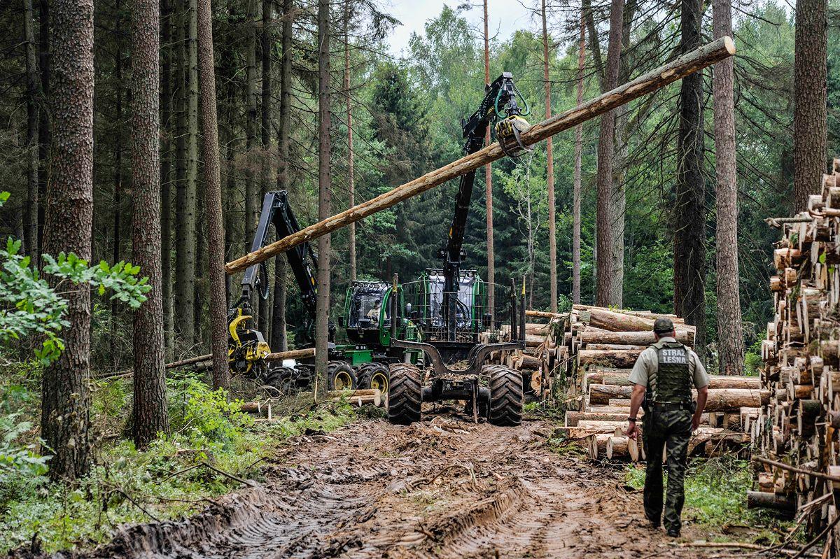 Defiende el bosque
