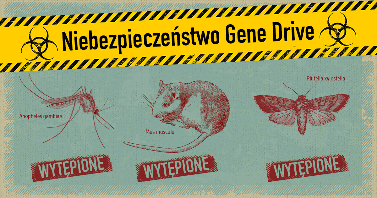 A mosquito, a mouse and a moth titled with hazard gene drive and marked eradicated