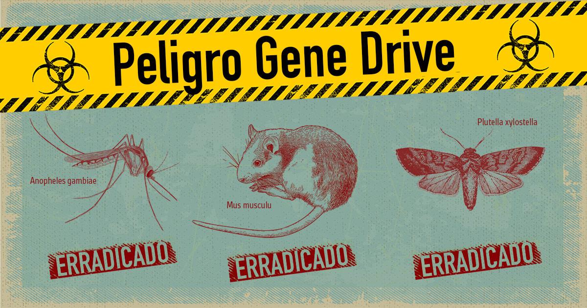 La peligrosa tecnología gene drive aplicada a un mosquito, un ratón y una polilla, ahora erradicados.