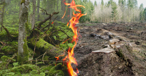 Collage von verbranntem und nicht verbranntem Wald
